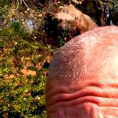 Kittylickrr BDSM photo on San Jose Kinkers Club