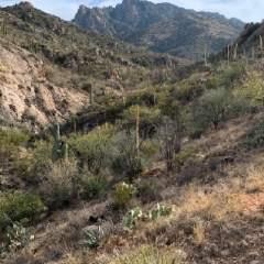 Tucsonfriend