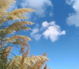 Pampas grass: the not-so secret symbol of swingers is a turn-off
