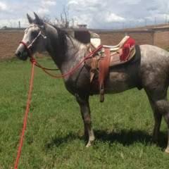 Manú Profile Photo